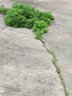 vegetation takes over cement